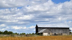 Late summer at the farm - Caledon, Peel Region, Ontario (edk7) Tags: sky cloud ontario canada building tree architecture barn rural fence landscape countryside farm country rustic nikond50 crop vista treeline weatheredwood bucolic 2007 caledon unpainted oldstructure gambrelroof barnboard peelregion nikonafnikkor50mm118 edk7