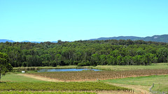 Hunter Valley Vineyards (Merrillie) Tags: trees sky mountains nature rural countryside nikon dam australia hills vineyards nsw coolpix fields farms huntervalley gumtrees paddocks pokolbin p600