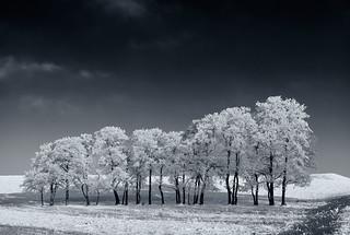 Frozen Tree Line