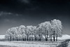 Frozen Tree Line (claustral) Tags: trees winter bw snow cold monochrome clouds skåne frost sweden row rime simple toned tinted i500 interestingness339 vomb silvåkra explore20160126