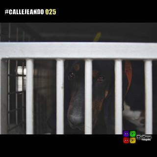 #CALLEJEANDO 025