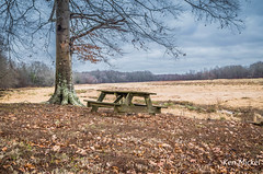 Carroll Lake, Tennessee (Ken Mickel) Tags: trees winter plants tree outdoors photography tennessee things picnictable carrolllake