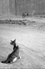 Cats, Bandar Abbas, Iran I (Behsa) Tags: cats iran middleeast bandarabbas