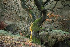 IMG_2583 (markrbowman) Tags: winter light colour scotland moss goldenhour