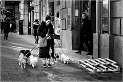 Some walk with a smile.Some do not. (Per sterlund) Tags: city people blackandwhite bw dogs walking sweden stockholm candid schweden hund fujifilm sverige sh bnw suecia sveavgen baw sude 2016 svartvitt photographiederue gatufoto fotografadecalle fotografiadistrada strasenfotografie fujifilmxe1