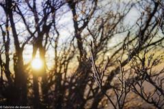 20022016-_MG_6684 (fabriziodedonatis) Tags: sunset italy panorama snow ice canon de landscape frost tramonto fabrizio 7d neve urbino 1855 pesaro ghiaccio nerone montaga donatis