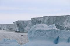 Ein kleiner Eisberg treibt vor der imposanten Kante der Drygalski-Eiszunge