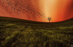 Wildest Dream (Mahmood Alsawaf) Tags: sunset wild motion tree art beautiful field birds canon photography lights golden landscapes flickr fineart iraq manipulation       kurdstan      mahmoodalsawaf