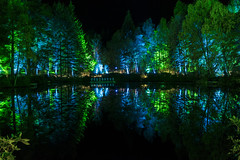 Enchanted Forest (Christophe Pfeilstcker) Tags: uk light green night forest reflections scotland europe colours xris74 pixpassion