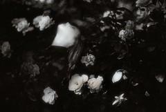 The darkest hour (.everlasting) Tags: flowers roses portrait film girl 35mm grain poetic melancholy blackness everlasting feverdreams hadararielmagar