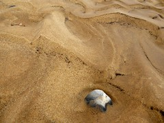 Covehithe + Benacre (little_auk) Tags: trees beach coast suffolk surfaces benacre covehithe
