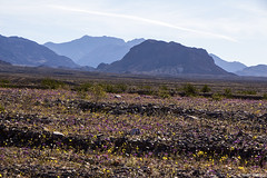 Death Valley Superbloom (isaac.borrego) Tags: california flowers sky mountains nationalpark desert deathvalley peaks echocanyon uploadedviaflickrqcom canonrebelt4i