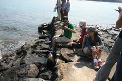 IMG_7658 (chupalo) Tags: sealions lavarocks islasplaza