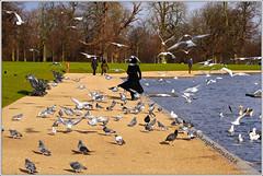 Lady In Black (Feeding The Birds) (bokosphotos) Tags: food seagulls birds panasonic feedingthebirds turns feedingthepigeons ladyinblack panasonicgh3 pz45175f4056lens