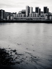 River Thames (firstnameunknown) Tags: city london water monochrome birds thames skyline architecture buildings river blackwhite cityscape wildlife greenwich peninsula camerabag northgreenwich camerabag2