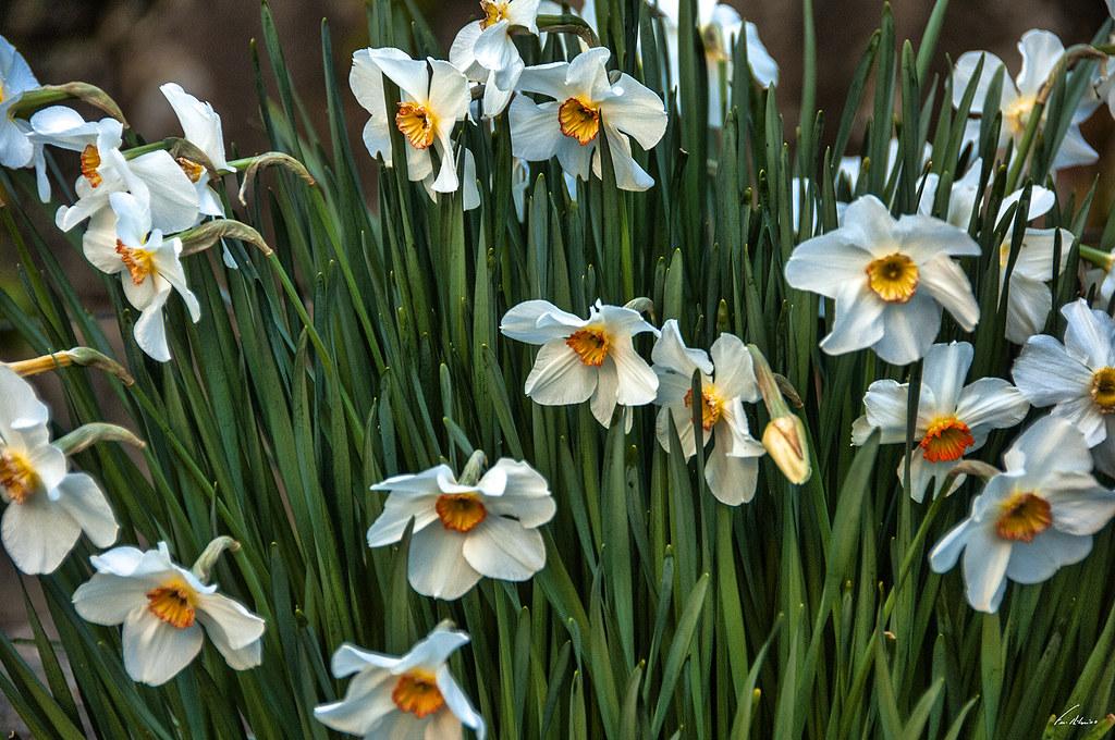 1600-flores-16 (7)