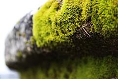 ; (lamujerdeverde) Tags: musgo verde green gusano roca