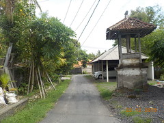 DSCN1790 (petersimpson117) Tags: pererenan pengembungan