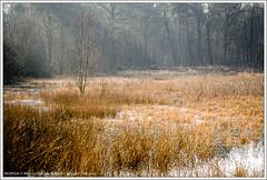 Stratumse Heide, Eindhoven (hypnotixed.com) Tags: nederland natuur eindhoven bos lente heide ochtend landschap ochtendlicht staatsbosbeheer stratumseheide