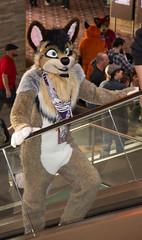 _DSC7948 (Acrufox) Tags: midwest furfest 2015 furry convention december hyatt regency ohare rosemont chicago illinois acrufox fursuit fursuiting mff2015