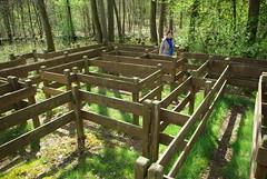 Im Labyrinth (ute_hartmann) Tags: labyrinth solling nienover reiherbachtal