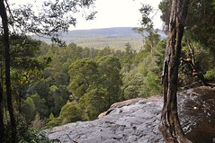 view from the brink of Russell Falls (davidparratt) Tags: waterfall tasmania mtfieldnp russellfalls