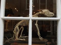 Colliergate Collie? (Munki Munki) Tags: york dog skeleton bones pandorasbox shopwindowdisplay nyorks colliergate