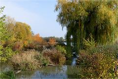 Herbst am Teich 27 (lady_sunshine_photos) Tags: austria europa herbst teich niedersterreich oase weinviertel herbstfrbung nexing prozessteich