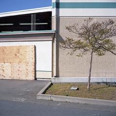 2016-227 (biosfear) Tags: green nature suburbia richmond americana plywood deadmall