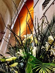 Flowers @StLouisArtMuseum 4-27-16 ~ #flowers #stlouisartmuseum #ForestPark #STL (Ben Moeller-Gaa) Tags: flowers stl forestpark stlouisartmuseum