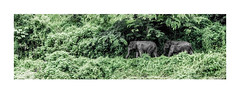 elephants highway (stilux) Tags: trees color tree green highway key jungle elefant elefants elefanten djungel djungle