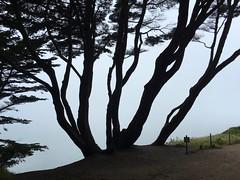 (tedd4u) Tags: sanfrancisco california blackandwhite cliff tree grass silhouette fog coast pacific foggy dirt trail landsend backlit