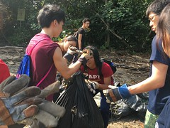 42-Env&CivSoc-World-Water-Day-LCK-Cleanup-26Mar16 (Habitatnews) Tags: mangrove capt nus worldwaterday limchukang iccs