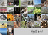 April 2016 mosaic (keepps) Tags: mosaic month bighugelabs