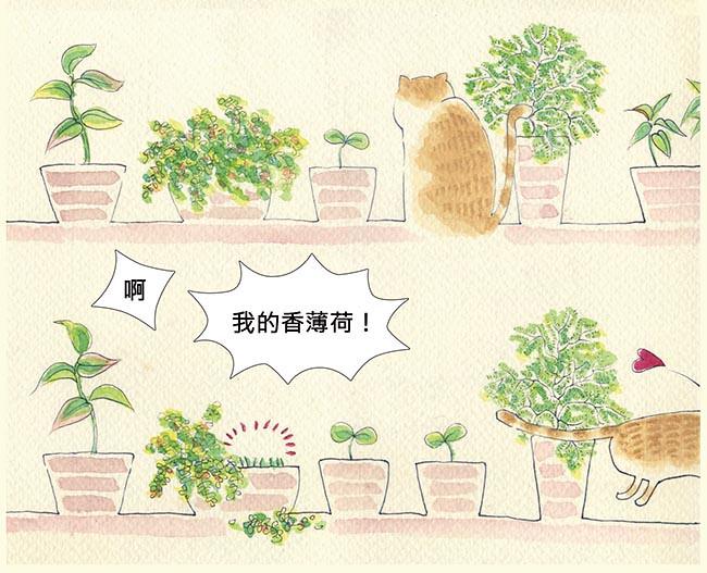 家裡來了一隻貓 愛吃植物的貓