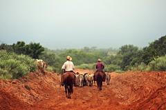 Cowboys Like Us (It Feels Like Rain) Tags: ranch cowboys cowboy texas cattle cows westtexas dirtroads reddirt ranches texasranches cowboyslikeus