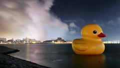 Macau Duck (acha191) Tags: colour water night canon giant eos coast duck waterfront rubber macau f4 acha lapse 6d 1740l taipa acha191 acha2016