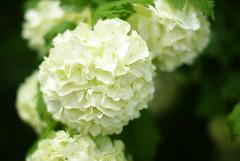 (LaLa83) Tags: ohio white flower nature outdoors spring flora sony may marcy hike alpha metroparks 2016 a230 slaterun pickawaycounty ruralohio slaterunmetropark ohiofoothills exploreohio