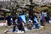 20160405-039-Picnics under Yoyogi-koen cherry blossoms (Roger T Wong) Tags: travel people holiday japan garden balloons tokyo spring picnic crowd harajuku cherryblossoms yoyogikoen 2016 canonef70200mmf4lisusm canon70200f4lis canoneos6d rogertwong
