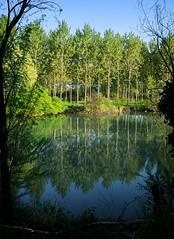 Riflessi (Agnolo) Tags: river countryside nikon fiume campagna nikkor riflessi treviso veneto sile 1685 casalesulsile d7100 parcodelsile