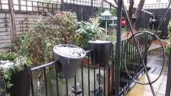April 16th snow !!!! (Orchids love rainwater) Tags: movie mygarden cheltenham 4c april16thsnow