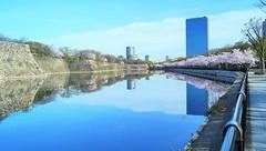 Crystal Tower in spring [explored on April 13, 2016] (Takashi K. A) Tags: park reflection building castle japan spring  sakura cherryblossoms osaka moat oap   obp  2016