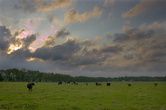 Cows Under a Purple Sunset (cleverfoxphotography) Tags: bridge sunset sky lake nature field grass louisiana purple cows martin country flare herd cajun breaux