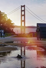 Golden light leak (PeterThoeny) Tags: sanfrancisco california light sky bird water puddle lights bath birdbath raw outdoor lightleak goldengatebridge goldengate sanfranciscobay leak hdr photomatix fav100 1xp waterpuddle puddleofwater nex6 sel55210