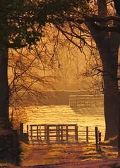 Morning (tobymeg) Tags: morning trees sunlight golden scotland panasonic holywood fz72