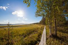 Scenery near Juntusrannantie (neatmummy) Tags: summer nature finland sunny swamp finnish kes elokuu kainuu suomussalmi canoneos5dmarkii