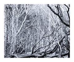 Reclining (bigtalljohn) Tags: ilford panf invernessshire mamiyarb67