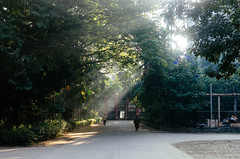 The Familiar Walkway... (Sheikh Shahriar Ahmed) Tags: morning light mist fog digital campus golden nikon walkway dhaka bangladesh sunray buet dhakadivision sheikhshahriarahmed