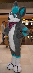 _DSC7963 (Acrufox) Tags: midwest furfest 2015 furry convention december hyatt regency ohare rosemont chicago illinois acrufox fursuit fursuiting mff2015