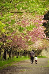 (mizuk@) Tags: park pink white flower japan canon spring  cherryblossom sakura  mie